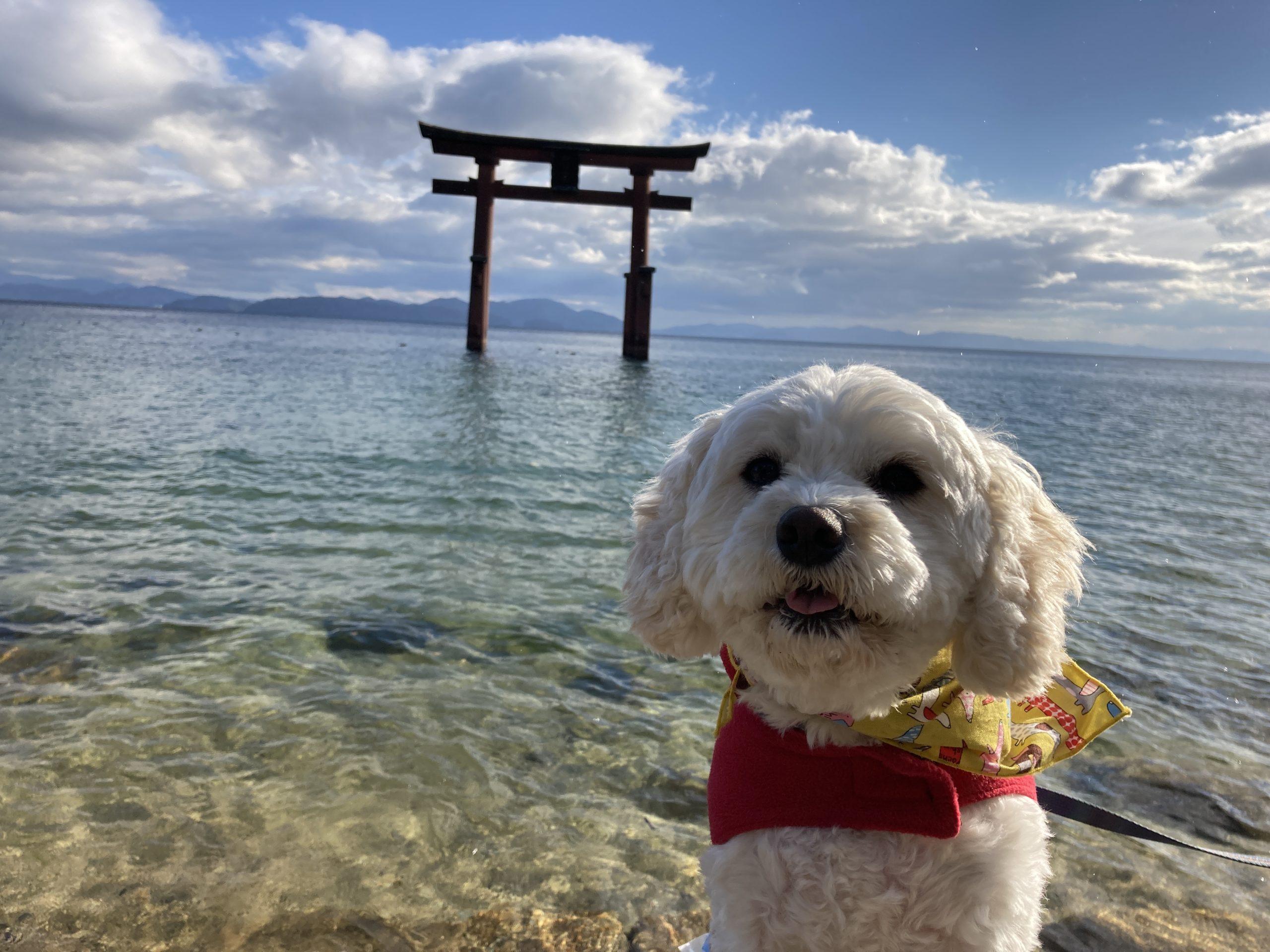 白髭神社大鳥居と愛犬